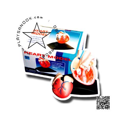 TY-8006 ชุด หัวใจ(จำลอง)HeartModel
