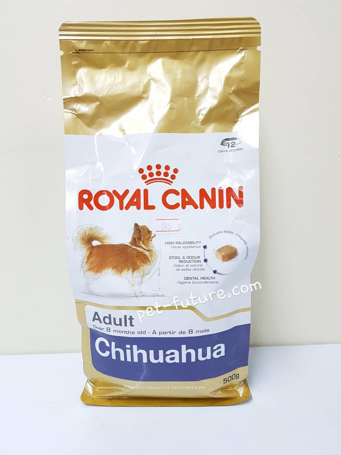 BHN Chihuahua junior 500 g. ลูกสุนัขสายพันธ์ชิวาวา Exp.6/18