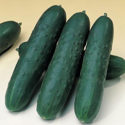 Japan Cucumber (แตงกวาญี่ปุ่น)