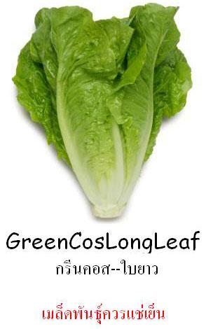 กรีนคอสใบยาวรี Green Cos Long Leaf