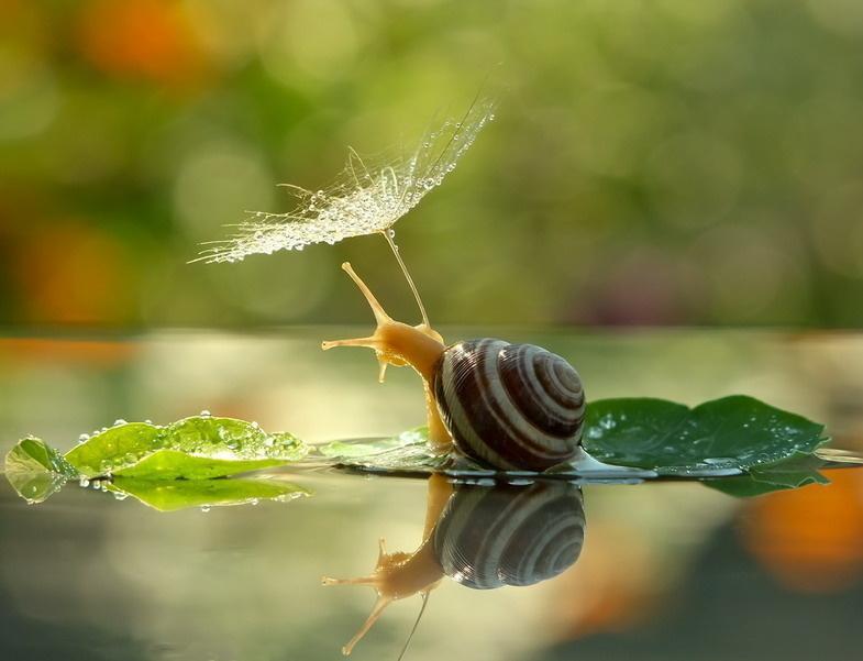 Snail Extract (สารสกัดหอยทาก)