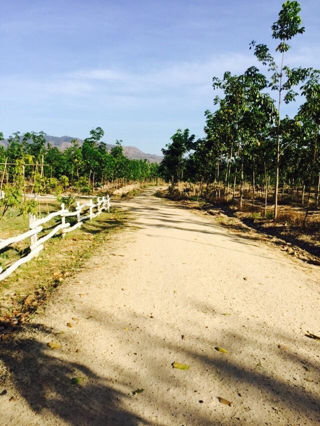 ที่ดินสวย 1,300 ไร่ เชียงใหม่ &#x2605 1,300 rai beautiful of land in Chiang Mai &#x2605