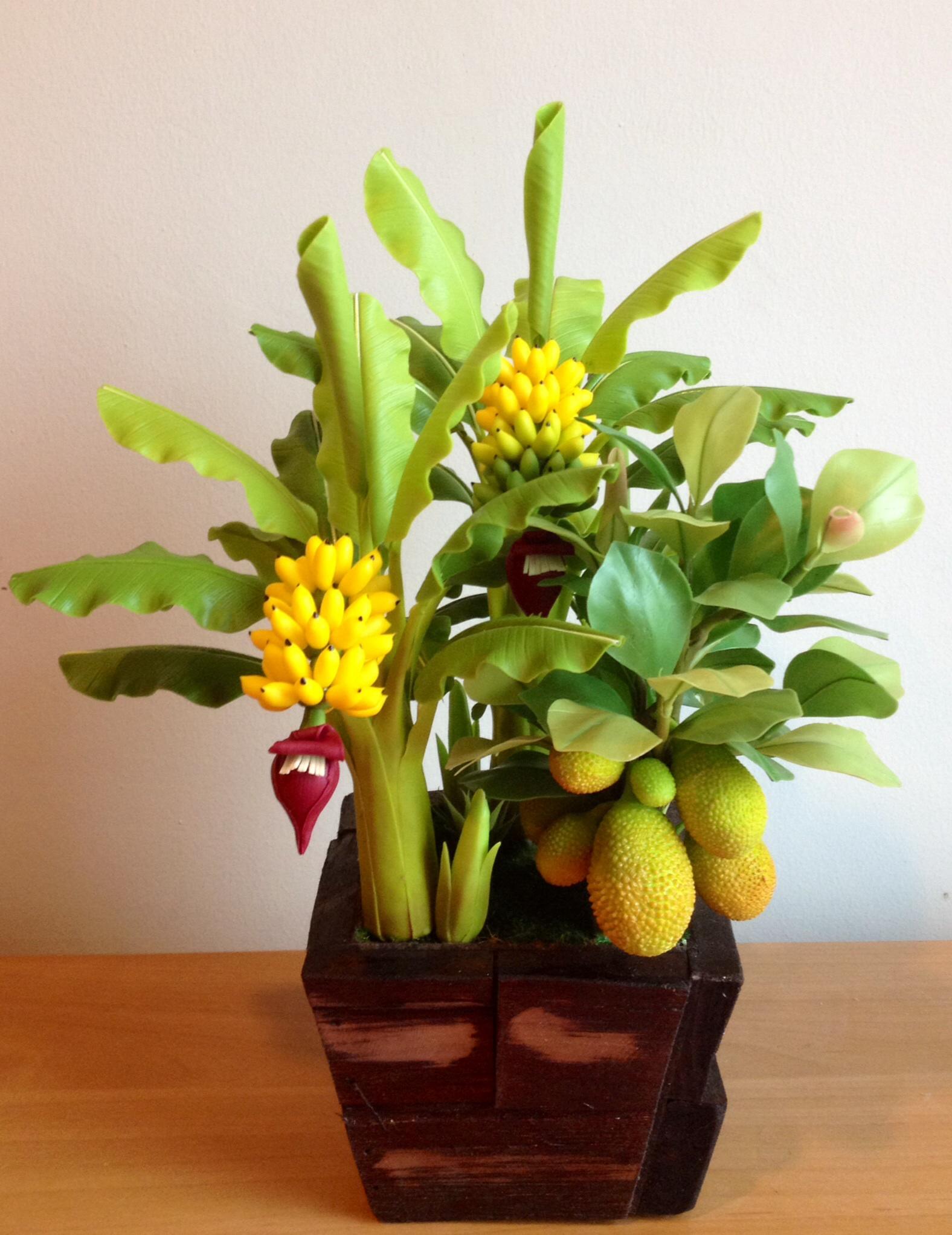 C018-สวนขนุน ต้นกล้วย ไซร์ 6-9 นิ้ว