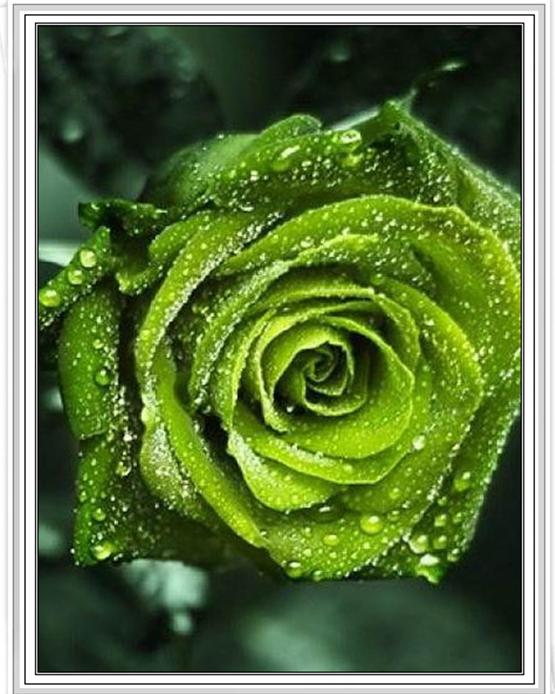 """2279 ภาพ diamond """"ดอกกุหลาบสีเขียวเข้ม"""""""